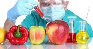 مواد غذايي ترنسژنيك