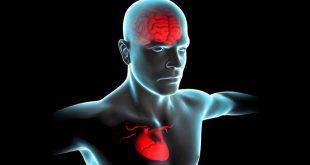 سلامت قلب و مغز